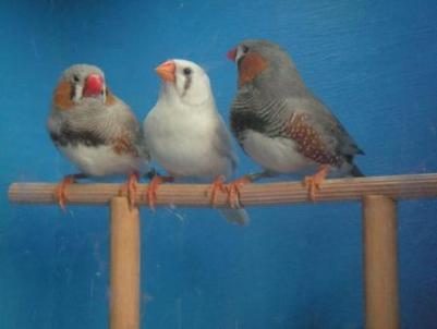 trio_mandarines_3.jpg