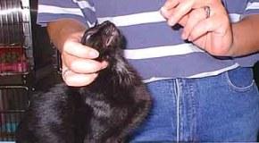 Desparasitaciones internas en gatos