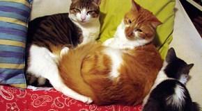 Los gatos en invierno: cómo cuidarlos
