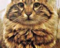 El arañazo del gato