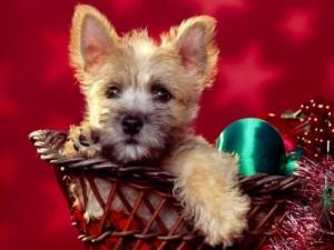 Pequeños tips antes de regalar un perro en estas fiestas