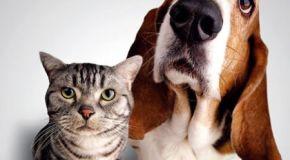 Concurso mascotas