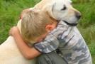 Consejos y cuidados para sus mascotas