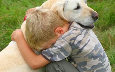 Cuidado para su mascota