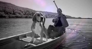FRONTLINE TRI-ACT, el nuevo antiparasitario externo para tus perros