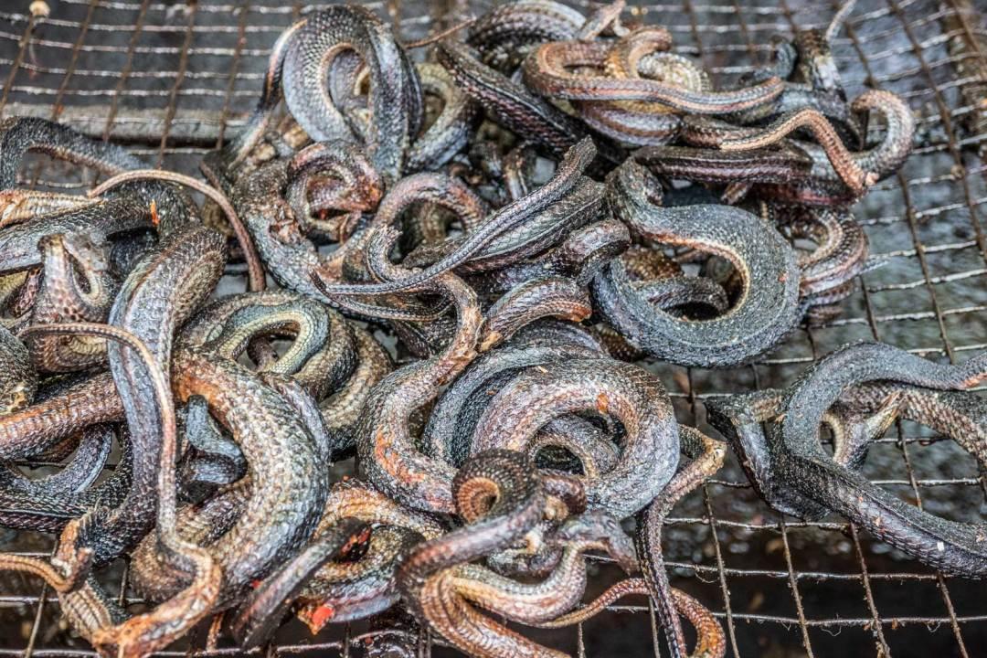Battambang-snakes-1600x1067