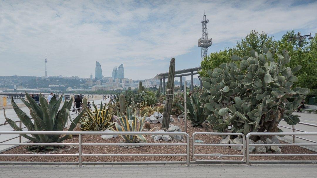 plants-in-Milli-Park-Baku-Azerbaijan-1600x900