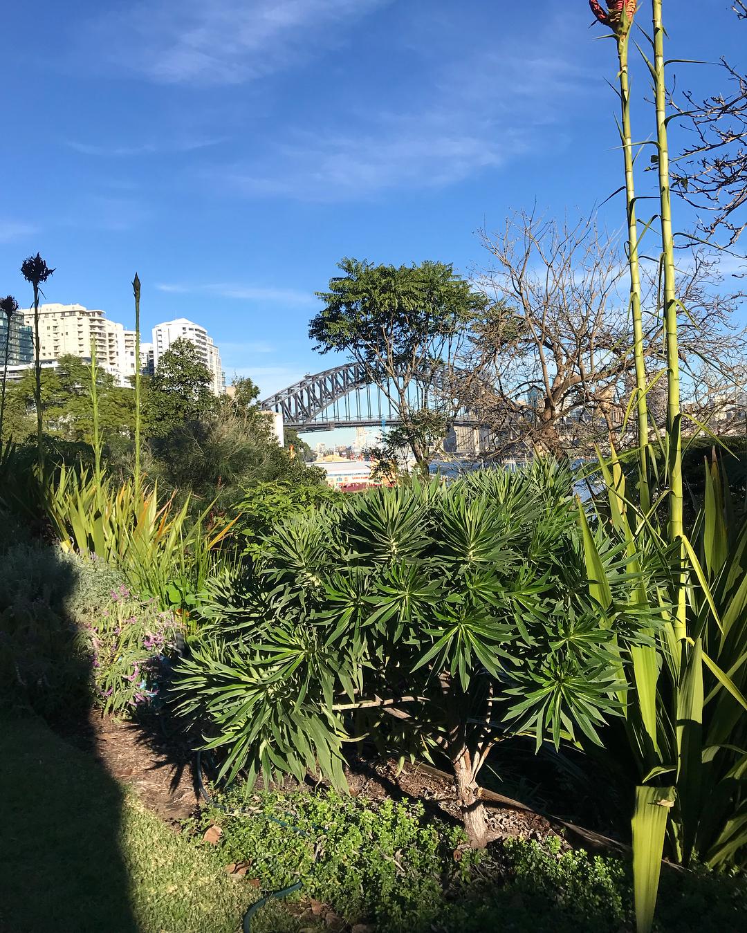 Sydney's Hidden Gems Wendy-Whiteley's-Secret-Garden