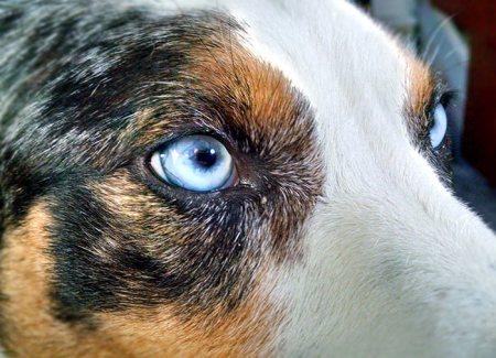 Zulu Closeup