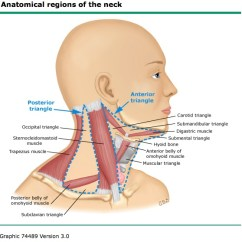 Where Are My Lymph Nodes Diagram Meyer E47 Wiring The Next Image Shows Location Of Node Groups In Neck There Superficial And Deep To Sternocleidomastoid