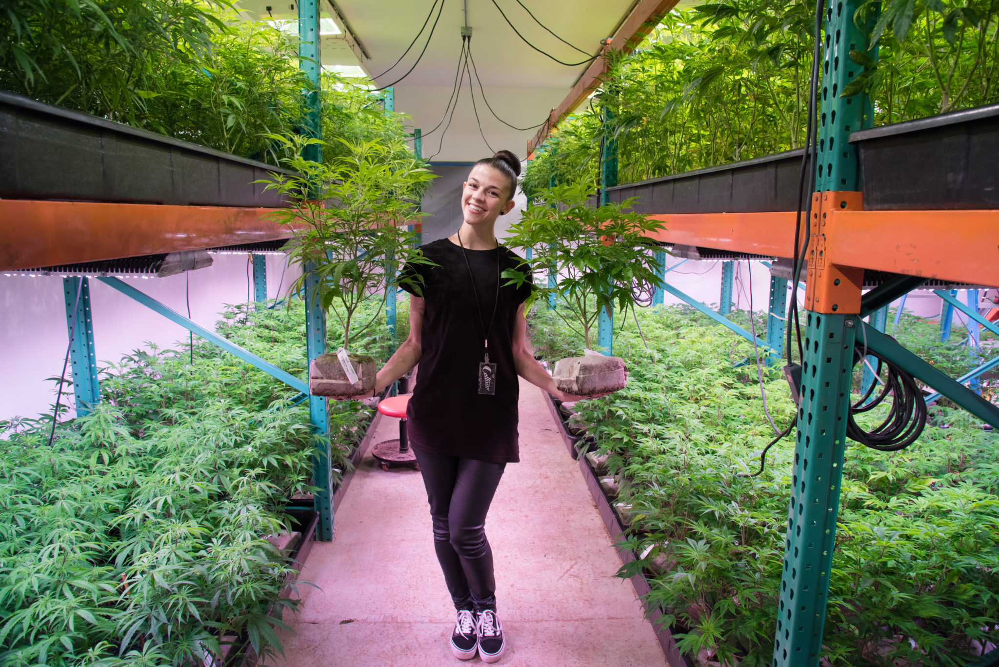 Best Indoor Grow  Touring Washingtons House of Cultivar