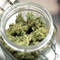 Medizinisches Marihuana für alle