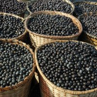 Controversial acai berries