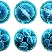 Fonte di cellule staminali