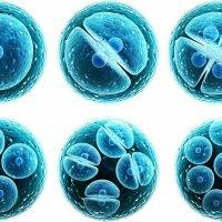 Източник на стволови клетки