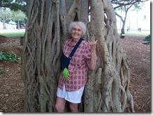 banyan tree-honolulu-hawaii