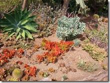 plants-trees-shrubs-flowers-hawaii-honolulu-zoo (2)