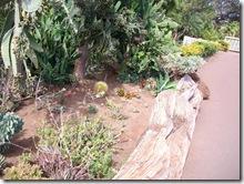 plants-trees-shrubs-flowers-hawaii-honolulu-zoo (4)