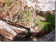 plants-trees-shrubs-flowers-hawaii-honolulu-zoo