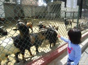 At Kuwait Zoo