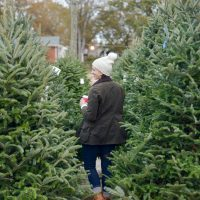 Welcoming December with a Trip to the Christmas Tree Farm