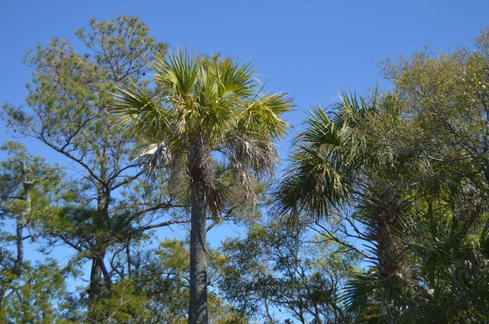 What to Do on Bald Head Island - I'm Fixin' To - @mbg0112 - What to Do on Bald Head Island by popular North Carolina travel blogger I'm Fixin' To