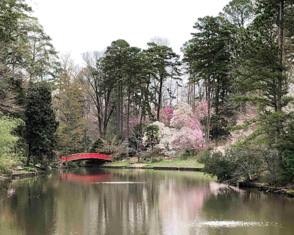 23 Awesome Things To Do in Durham - I'm Fixin' To - @imfixintoblog | Things to do in Durham by popular NC travel blog, I'm Fixin' To: image of Sarah P. Duke gardens.