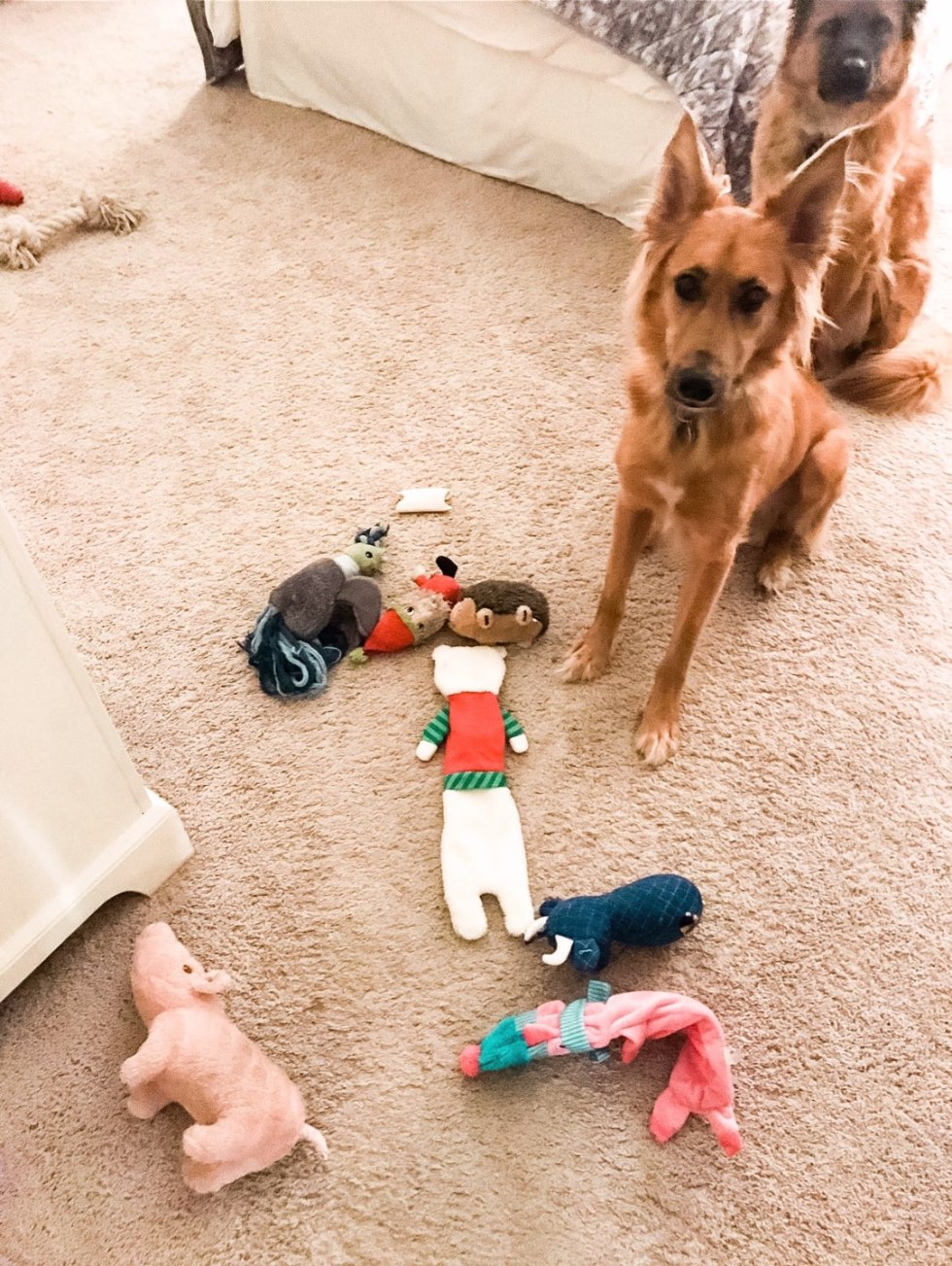 Top 10 Best Dog Toys on Amazon your Pup Will Love - I'm Fixin' To - @mbg0112