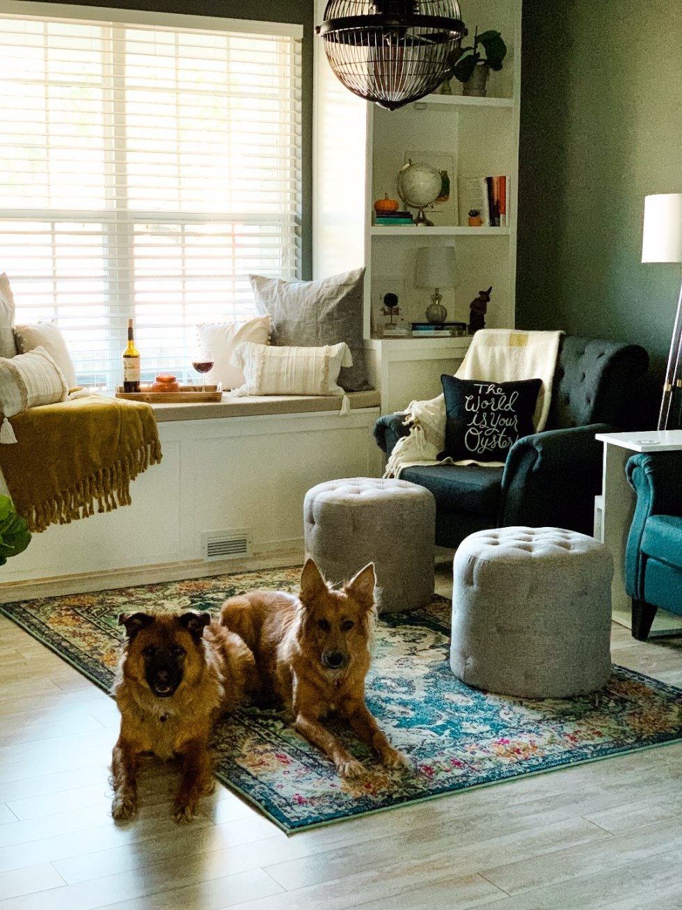 Best Throw Pillows by popular NC life and style blog, I'm Fixin' To: image of two dogs laying on the floor in a sitting room.