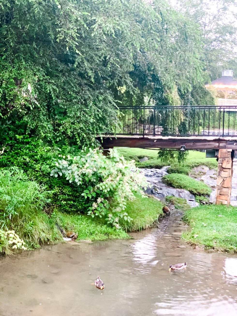 Where to Stay in Blowing Rock: a Meadowbrook Inn Review - I'm Fixin' To - @mbg0112 | Meadow Brook Inn Blowing Rock by popular N.C. travel blog, I'm Fixin' To: image of a brook with ducks swimming in it at Meadow Brook Inn.