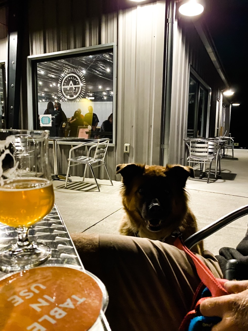 A Casual Weekend in Asheville: the Best Things to Do with your Dogs - I'm Fixin' To - @mbg0112 Weekend In Asheville by popular NC travel blog, I'm Fixin' To: image of a dog outside at a brewery.