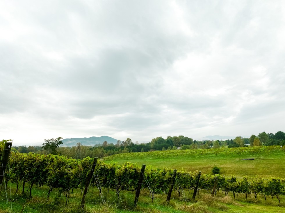 Western NC Wineries: 6 Wineries to Visit During your Next Girls' Weekend - I'm Fixin' To - @mbg0112 |Western NC Wineries by popular NC blog, I'm Fixin' To: image of Round Peak Vineyards.