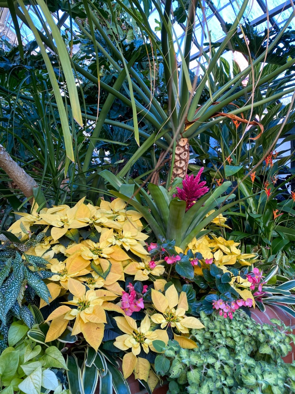 Christmas in Asheville: a Weekend Getaway During the Holidays - I'm Fixin' To - @imfixintoblog |Christmas in Asheville NC by popular NC lifestyle blog, I'm Fixin' To: image of tropical plants inside a greenhouse.