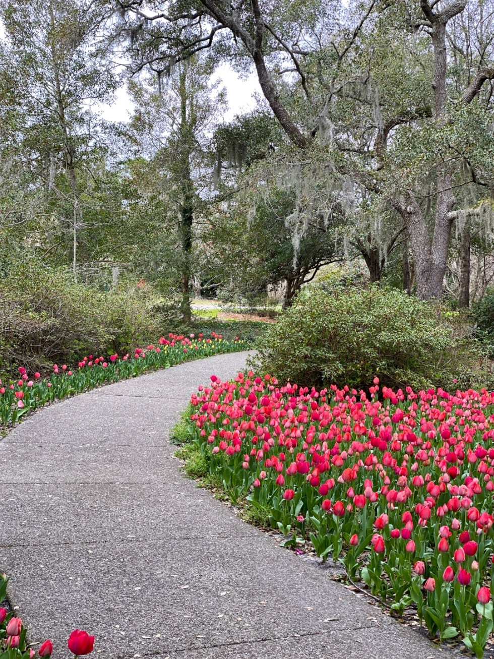 A Spring Weekend in Wilmington, NC: the Best Things to Do - I'm Fixin' To - @imfixintoblog |Weekend in Wilmington by popular NC travel blog, I'm Fixin' To: image of pink tulips growing next to a paved walking path.