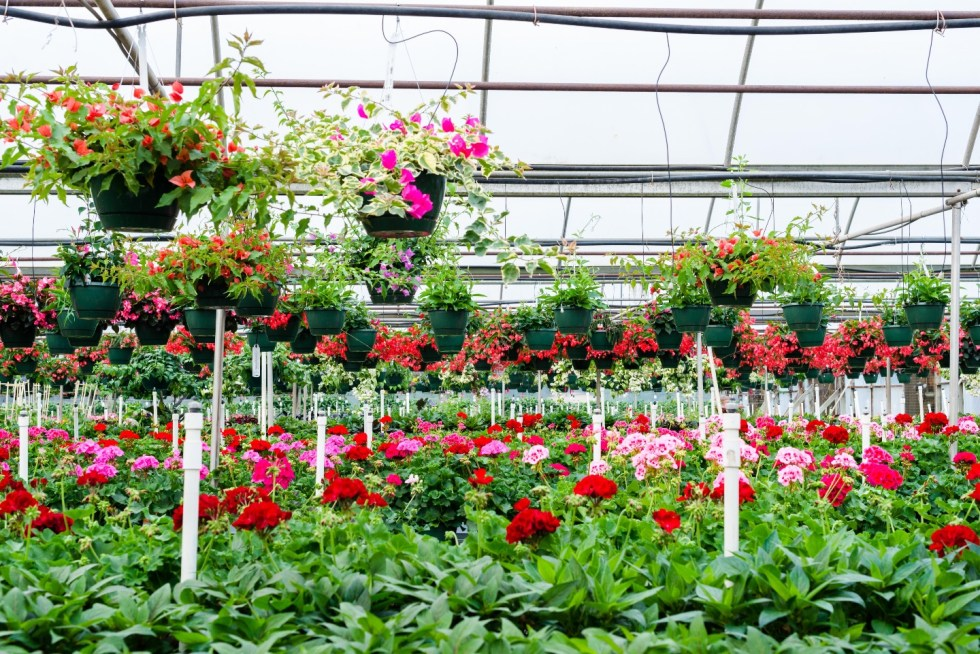 5 Spring Planting Tips with Fairview Garden Center - I'm Fixin' To - @imfixintoblog |Best Plants to Plant in Spring by popular NC lifestyle blog: image of red and pink flowers at the Fairview Garden Center.