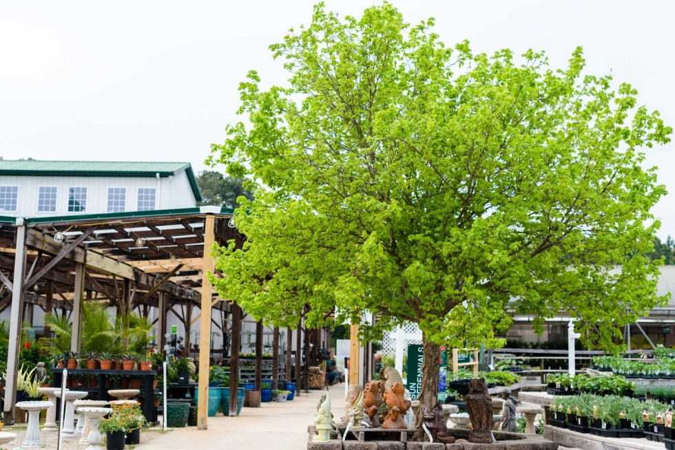Best Plants to Plant in Spring by popular NC lifestyle blog: image of the Fairview Garden Center.