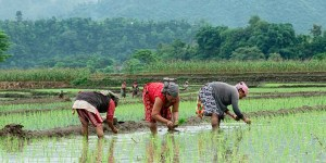 Rice Planting Festival in Nepal