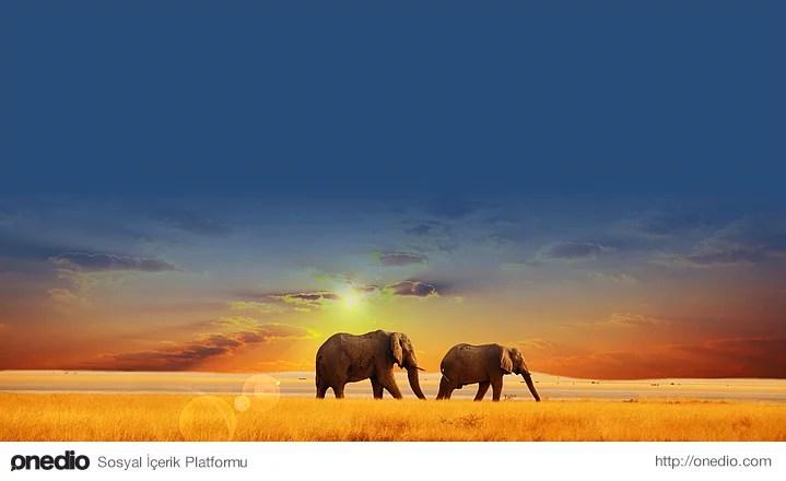 Filler ayakta uyurlar ancak yakalanmış veya sirkte çalıştırılan filler bir süre sonra insanlar gibi yatarak uyumayı öğrenirler.