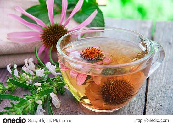 Ekinezya çayı