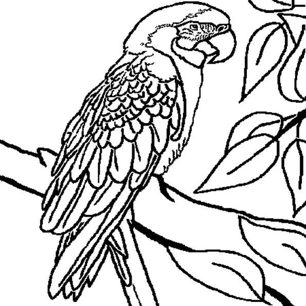 Coloriage Perroquet en Ligne Gratuit à imprimer