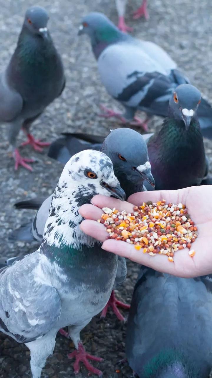 Comment éloigner les pigeons : les répulsifs naturels