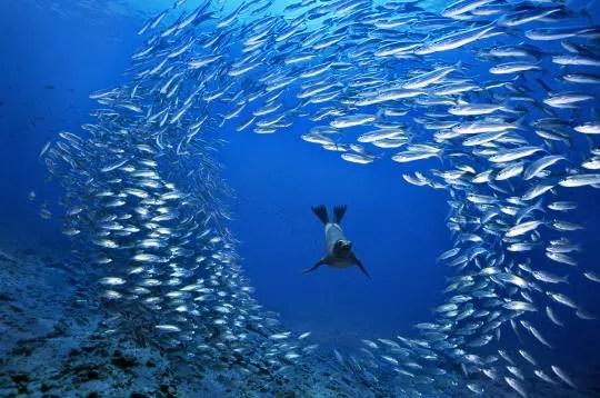 Hd Ocean Life Wallpapers Lion De Mer Des Galapagos Equateur