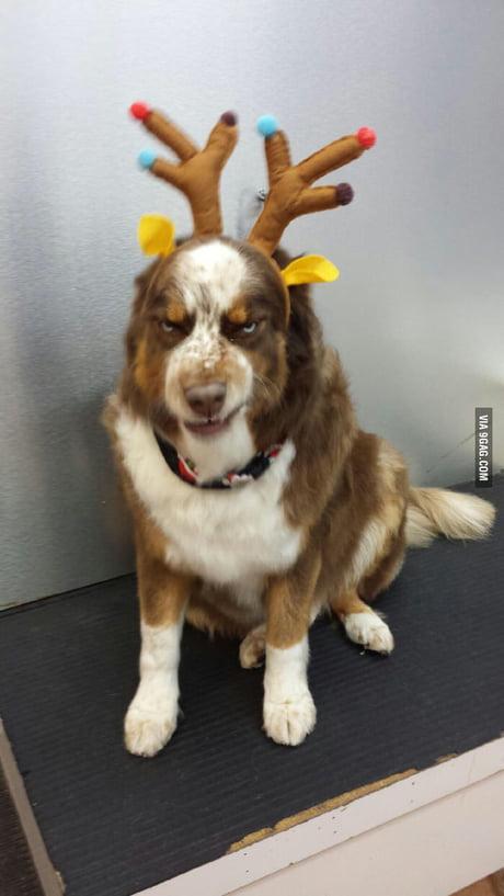 Not Impressed Dog : impressed, Impressed, Holidays, Spirit