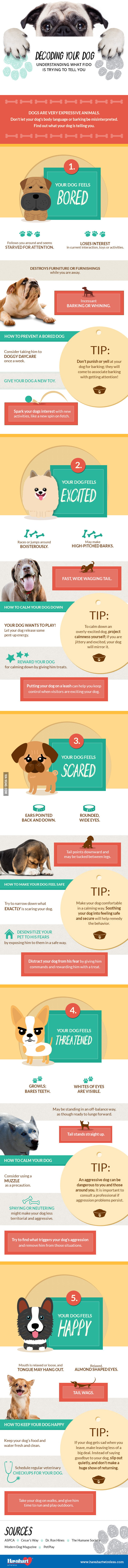 What Your Dog Is Really Trying To Tell You From Its Behavior