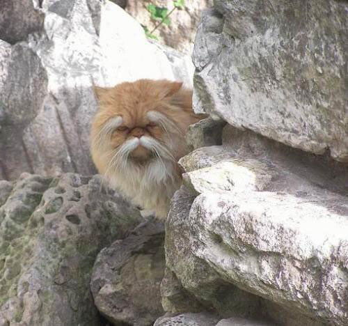 I'm 100% sure this f**king cat knows Kung Fu...
