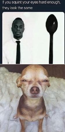 Chihuahua Squinting Meme : chihuahua, squinting, Squint