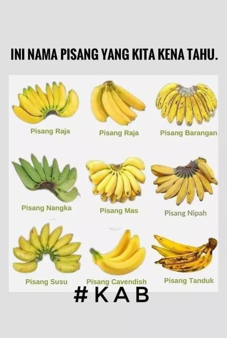 Pisang Raja Nangka : pisang, nangka, Kenali, Pisang