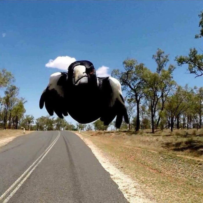View from a rear facing motorcycle helmet camera in Australia
