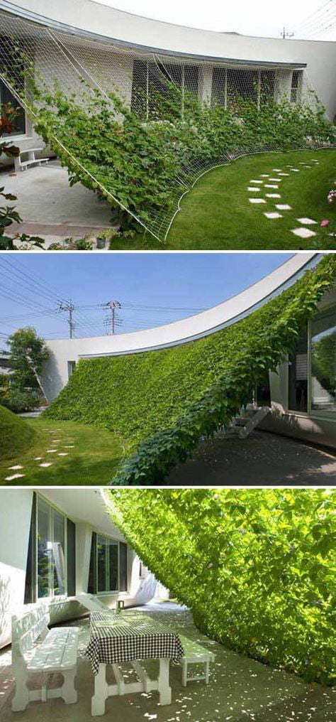 Grow your own shade