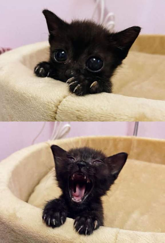 The smallest yawn